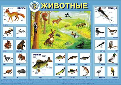 Плакат Животные -