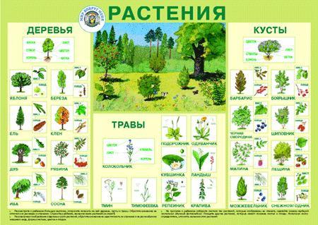 Плакат Растения -