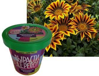 Набор для выращивания Вырасти Дерево Африканская ромашка - Африканская ромашка – нежный, красивый цветок родом из Африки, напоминающий своим видом ромашку.