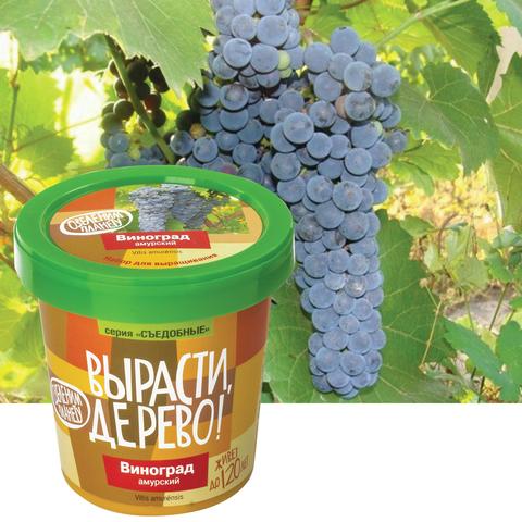 Набор для выращивания Вырасти Дерево Виноград Амурский - При помощи круговых вращательных движений усиков, виноград взбирается по любым близлежащим постройкам. Он может подниматься на высоту до 30 метров.