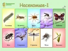 """Магниты """"Насекомые"""" (20*30)"""