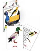 """Дидактические карточки """"Птицы наших лесов"""""""