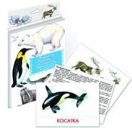 """Дидактические карточки """"Животные Арктики и Антарктики"""""""