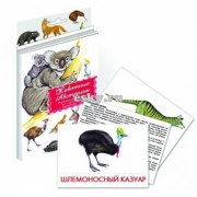 """Дидактические карточки """"Животные Австралии"""""""