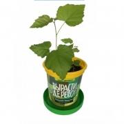 Набор для выращивания Вырасти Дерево Русская берёзка