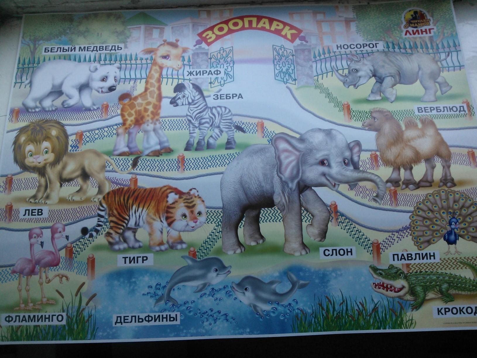 Плакат Зоопарк -